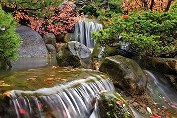 pond_beauty_WEB
